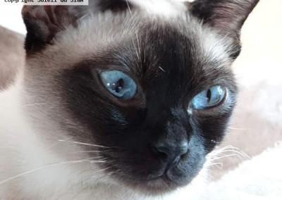 Les yeux bleus de Dakota. Merci à Marie- Jeanne pour cette photo
