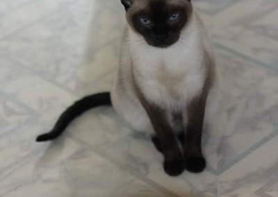Dakota 6 ans le 11 novembre 2014. Elle vit à la maison