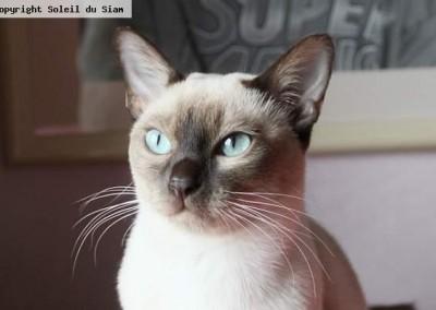 Une superbe couleur d'yeux