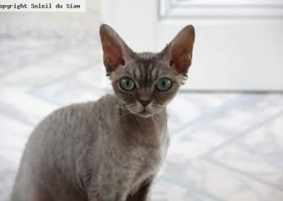 J'Adore une superbe chatte toute en beauté avec un caractère adorable