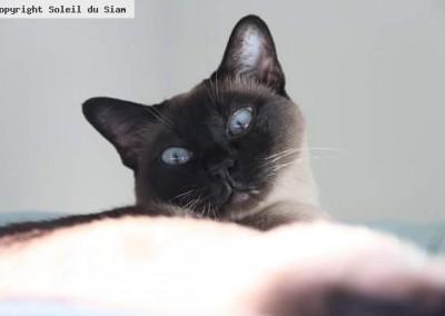 Dakota clôture l'année 2015 en nous montrant ses beaux yeux bleus. Elle est âgée de 7 ans et passe une retraite paisible à la maison.