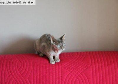Du haut du canapé J'Adore surveille ses bébés