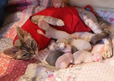 Naissance des chatons le 12 mars 2017