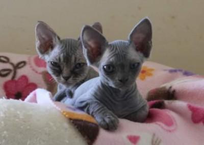 Mon duo bleu