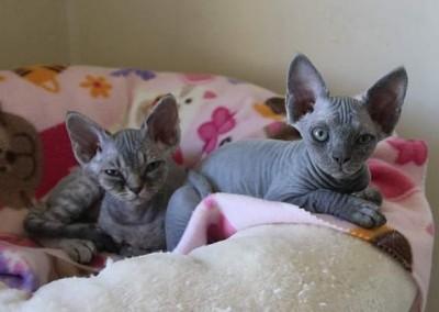 Lola la timide et Lilou la chef