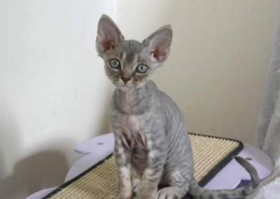 Lola sur son petit arbre à chat au 1er septembre