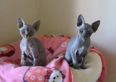 Les 2 poupées au 10 septembre