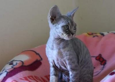 Lola de profil