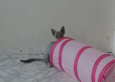 Lola et son tunnel à 3 mois