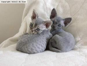 Lola et Lilou