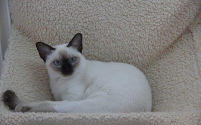 Nouvelles photos des chats et chatons
