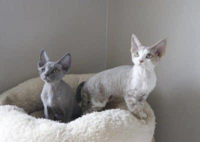 Oscar&Olivia3mois