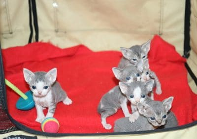 chatons3semaines